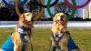 В Сан-Паулу организовали Олимпийские игры для домашних животных