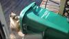 Енот украл мусорный бак целиком (ВИДЕО)