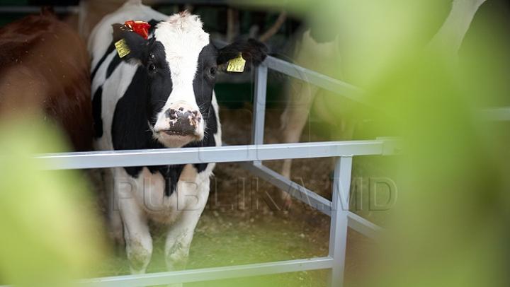 Морозы задали проблем животноводам: как домашний скот переносит зимнюю стужу