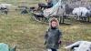 На Ямале из-за сибирской язвы эвакуированы 90 человек