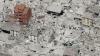 Число жертв землетрясения в Италии достигло 293 человек