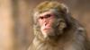 В мариупольском зоопарке обезьяна откусила палец ребенку