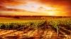 От града на этой неделе пострадало больше 200 гектаров виноградников