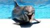 Дельфин ограбил посетительницу аквапарка (ВИДЕО)