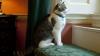 Дэвида Кэмерона призвали спасти кота Ларри от одиночества