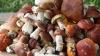 Российские туристы засолили грибы в ванной отеля в Швейцарии
