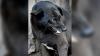Индия: стая бездомных собак загрызла женщину на глазах у сына