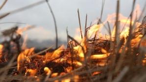 Пожары в Португалии уничтожили 250 тысяч га сухостоя