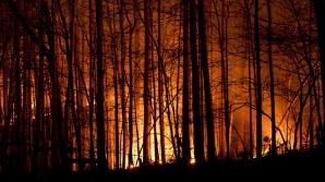 За сутки в Молдове сгорели 260 гектаров сухостоя и 40 гектаров леса