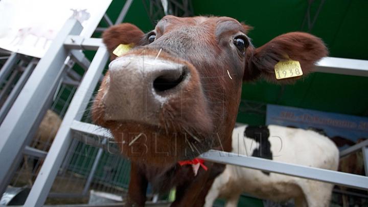 В Индии самый быстрый поезд сбил корову
