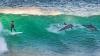 Дельфин едва не сбил подростка из Австралии во время серфинга