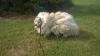 С прожившего шесть лет в сарае пса состригли 15 килограммов шерсти (ФОТО/ВИДЕО)