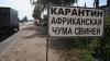 Африканская чума свиней дошла до Молдовы