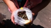 В московском метро задержали пассажира с пакетом боевых патронов