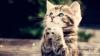 Видео спасения котенка в Калининграде