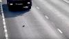 В России автомобилист спас выпавшего на дорогу котенка (ВИДЕО)