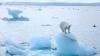 Экологи всего мира обеспокоены возможными последствиями глобального потепления