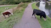 В Google из соображений безопасности замазали морду коровы