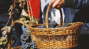 Национальный День вина возвращается на главную площадь страны