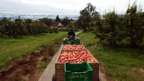 Фермеры спешат собрать урожай до наступления заморозков