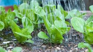 Гражданин Молдовы поливает овощи водой из реки Бык (ВИДЕО)