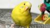Американка попала в тюрьму за угрозы скормить соседа попугаю