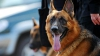 Служебная собака леушенской таможни унюхала партию экстази в машине