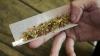 Полицейские нашли крупную партию марихуанны в столичном подвале