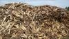 Жители сел готовятся к зиме: люди запасаются дровами и углем