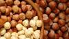 В Молдове начался сбор урожая фундука