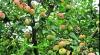 Водитель и кондуктор автобуса оставили пассажиров и ушли в сад за яблоками (ВИДЕО)