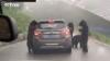 В Китае четыре голодных медведя атаковали внедорожник с людьми