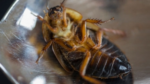 В Японии из-за таракана встал завод