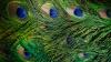 Палеонтологи установили цвет птиц в эпоху динозавров