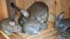В Чадыр-Лунге банда несовершеннолетних воровала домашних животных