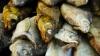 Мужчина угнал грузовик с пятью тоннами рыбы в Подмосковье