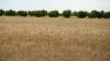 В селе Сирец по случаю Дня сельхозработника организовали выставку-продажу