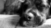 В Брянске спасли пса спустя неделю, как его замуровали под плитами и асфальтом