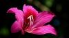 В Ботаническом саду начали цвести тропические растения