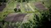 По делу о незаконной вырубке девяти гектаров леса задержаны семь человек