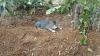 Кошка год живет на могиле хозяйки в Индонезии