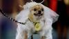Собачья мода в Кишиневе: сколько собак приняли участие
