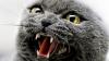 Бешеный кот покусал семерых человек и умер
