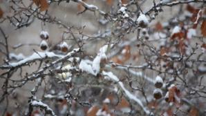 Мощнейшие снегопады обрушились на соседние страны