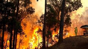 Вблизи Сиднея бушуют лесные пожары