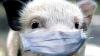Очаги африканской свиной чумы,обнаруженные на севере страны, больше не опасны
