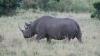 Премьер Танзании дал сутки на поиски пропавшего носорога