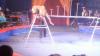 Леопард напал на зрителей во время представления: женщина закрыла собой ребенка