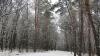 В подмосковном лесу найден мёртвым француз, пропавший после ограбления