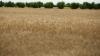 Утвержден закон о создании Национального фонда развития сельского хозяйства